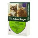 Bayer Advantage 80 для кошек свыше 4 кг